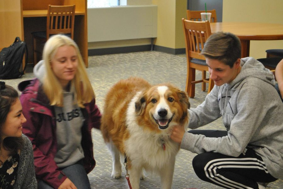 Freshman+Josh+Salava+pets+therapy+dog+Shaylee+in+Owen+Library+on+Oct.+17.