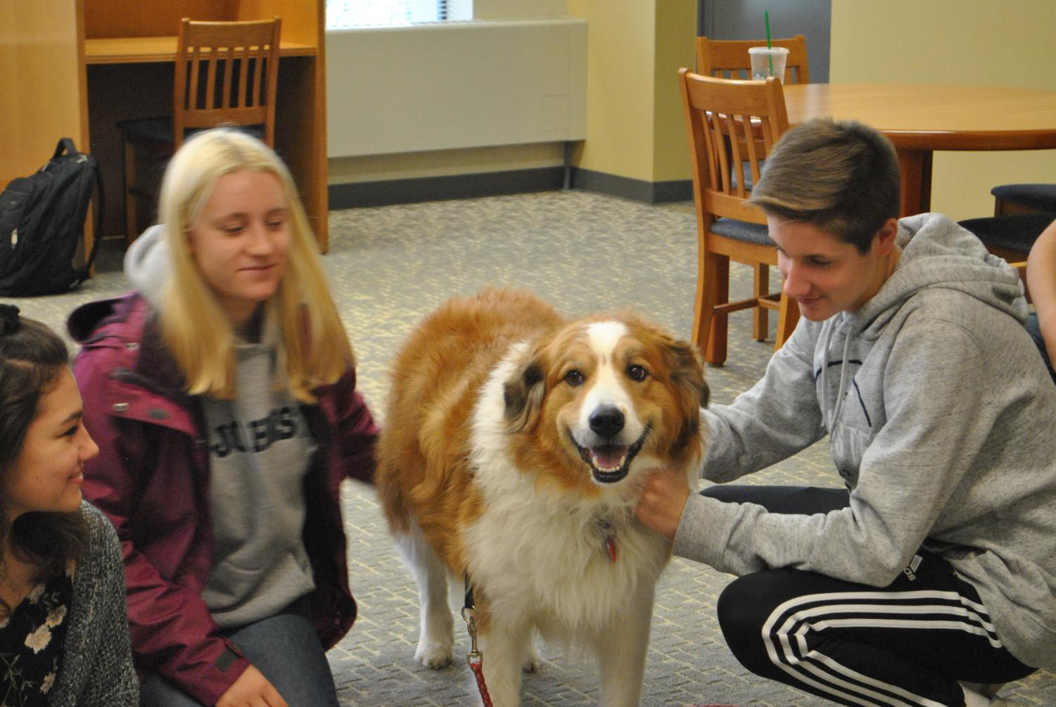Freshman Josh Salava pets therapy dog Shaylee in Owen Library on Oct. 17.